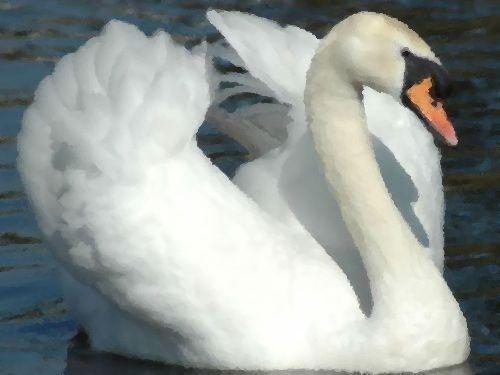 差別主義の白鳥00