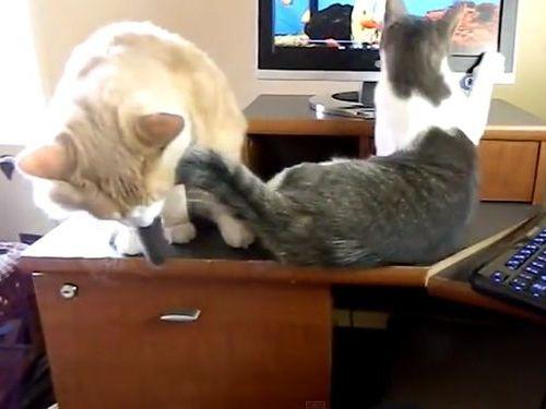 猫のモニタ画面・攻防戦04