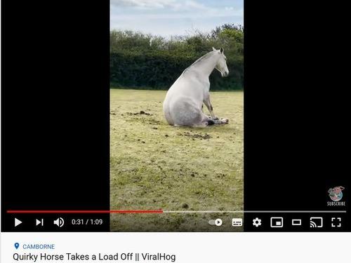 座り方が変な馬