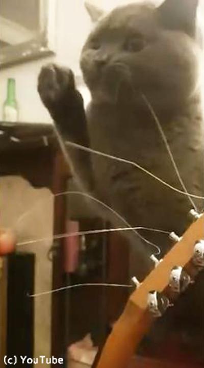 ギターの弦が気になる猫03