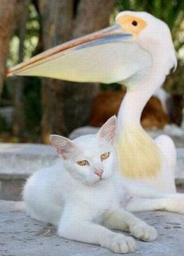 他の動物と仲良くする猫06
