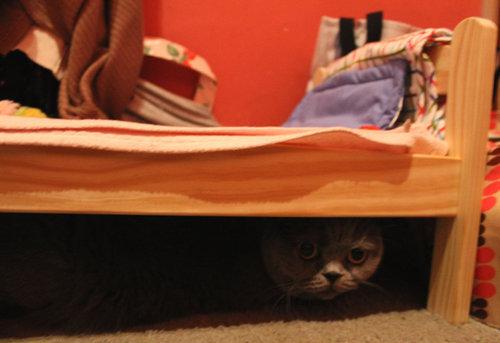 猫ベッド05