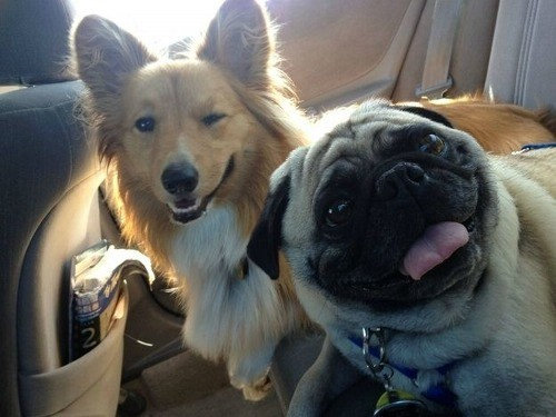 うれしそうな犬たち11