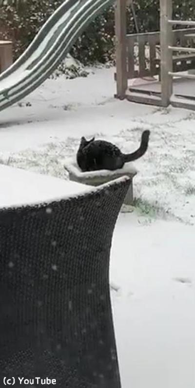 猫、雪の中でも元気いっぱい03