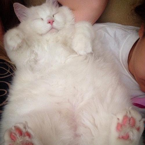 保護した子猫が、すばらしい毛並だった07