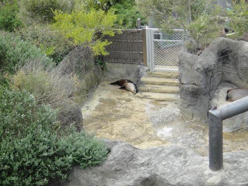 動物園に行ったらみんな寝ていた10