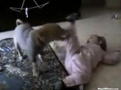 かかと落としする赤ちゃんvs犬