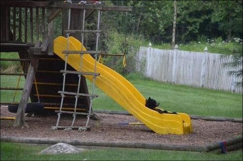 裏庭で遊ぶクマ04