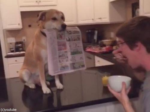 一家に1匹いると便利な犬00