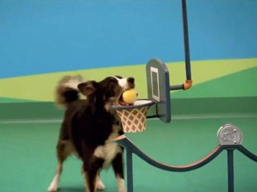 犬たちのピタゴラスイッチ01
