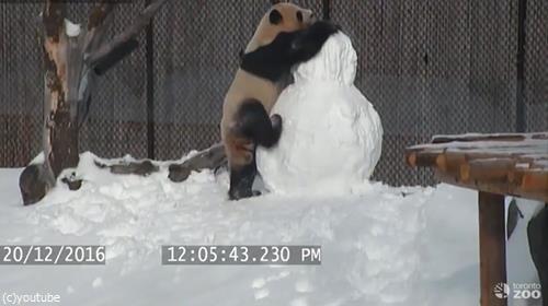 パンダVS雪だるま01