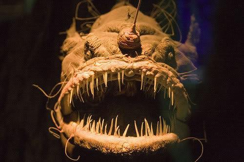 深海の生き物18