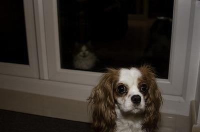 邪魔する犬と猫12