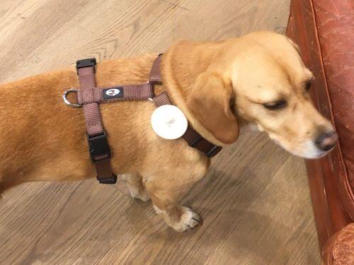 犬に盗難防止タグ02