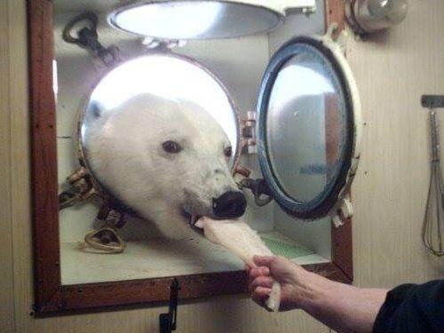北極調査隊の叔父に訪問者02