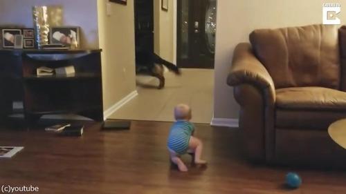 追いかけっこする赤ちゃんと犬02