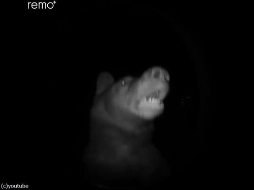 夜中にピンポン…クマだった!03