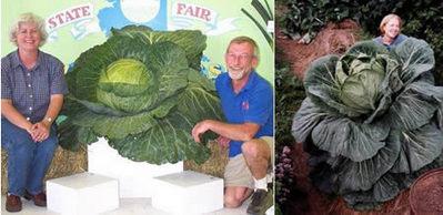 世界一大きな野菜や果物04
