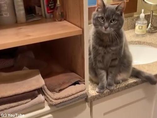 まったく猫ってやつは…ベタだけどかわいい00