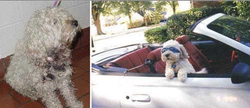 救助された犬や猫19