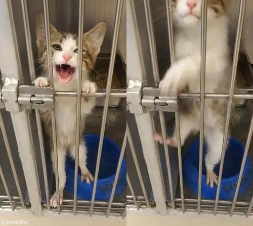 犬を求めて保護施設にきたら…この猫を連れて帰った01