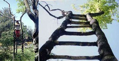 世界の奇妙な木15