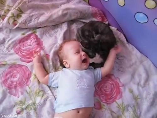 赤ちゃんをあやす猫04