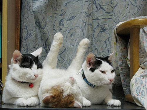猫の寝方19