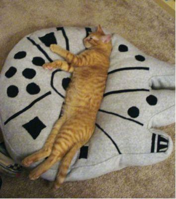 猫スターウォーズ04