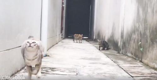 この猫の躍動感よ07