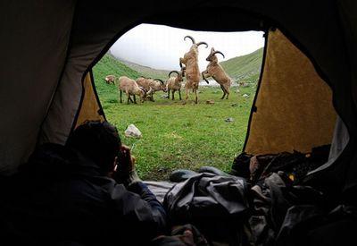 野生動物カメラマン02