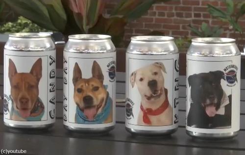 「ビール缶」のおかげで愛犬が見つかる01
