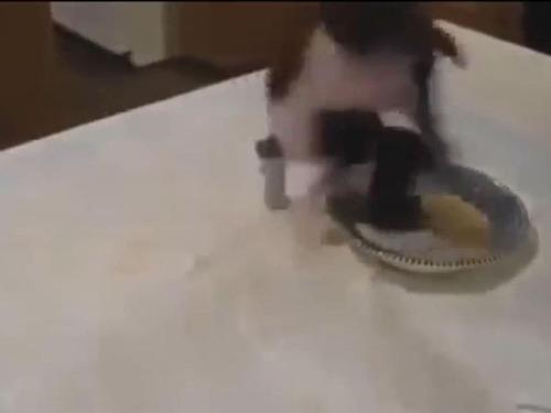 食事をすると体が伸びる子犬05
