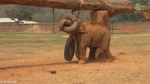 子ゾウ「もっと遊びたい!」母ゾウ「ご飯の時間よ!」01