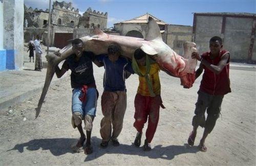 ソマリアの魚釣り11