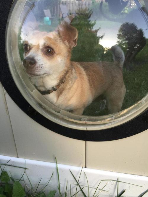 犬のためにフェンスに小窓05
