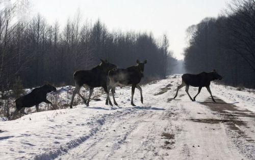 道路を渡る動物17