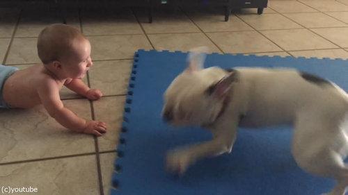 赤ちゃんをあやす犬01