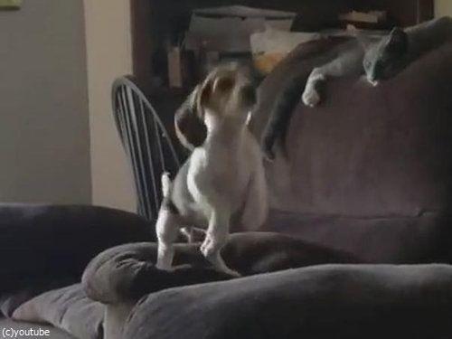 隣のソファーに飛び移ろうとする犬02