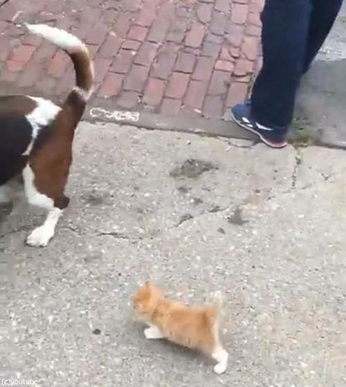 犬の散歩をしていたら迷子の子猫がついてきた04