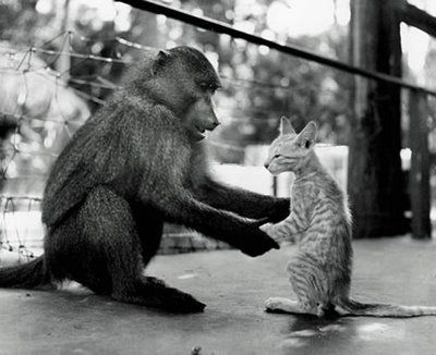 猿と猫の仲09
