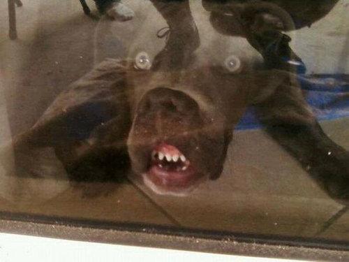 犬の表情08