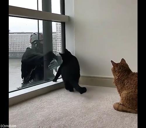 猫と窓掃除人が出会ったら05