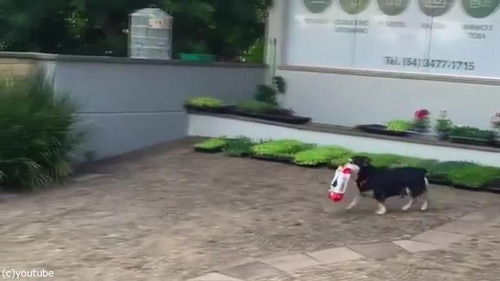 毎日お買いものにやって来る犬01