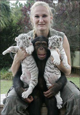ホワイトタイガーの赤ちゃんとチンパンジー03