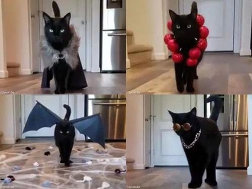 猫のファッションショー00