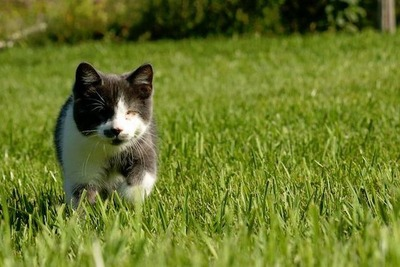 盲目の猫03