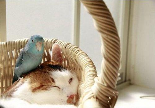 インコと猫02