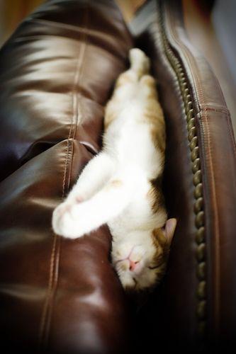 眠る猫21