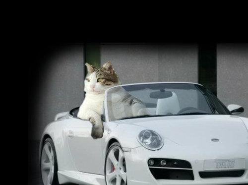 余裕のある猫04